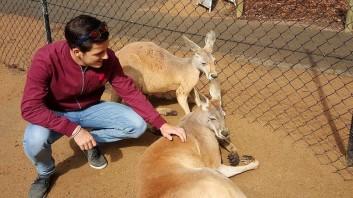 Cédric Joye en compagnie de 2 sympathiques kangourous